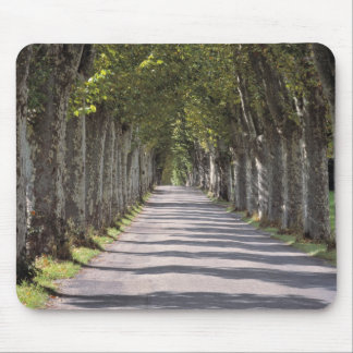 Europe, France, Cereste. Trees line this road Mouse Mat