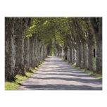 Europe, France, Cereste. Trees line this road Photographic Print