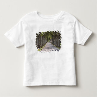 Europe, France, Cereste. Trees line this road T Shirt