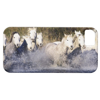 Europe, France, Ile del la Camargue. Camargue 2 Barely There iPhone 5 Case