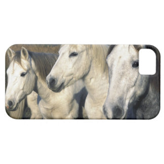 Europe, France, Ile del la Camargue. Camargue 3 Barely There iPhone 5 Case