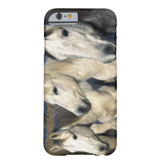 Europe, France, Ile del la Camargue. Camargue 3 Barely There iPhone 6 Case