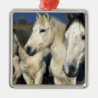 Europe, France, Ile del la Camargue. Camargue 3 Christmas Ornament