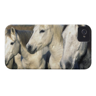 Europe, France, Ile del la Camargue. Camargue 3 iPhone 4 Cases