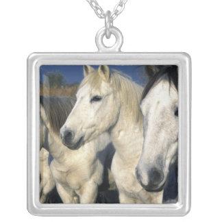 Europe, France, Ile del la Camargue. Camargue 3 Silver Plated Necklace