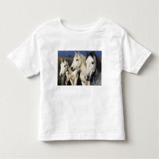 Europe, France, Ile del la Camargue. Camargue 3 Toddler T-Shirt