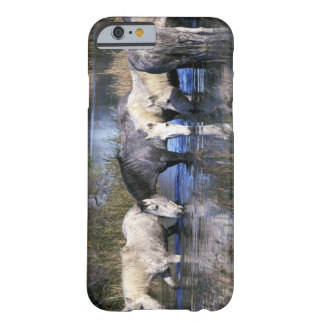 Europe, France, Ile del la Camargue. Camargue Barely There iPhone 6 Case