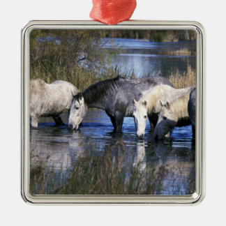 Europe, France, Ile del la Camargue. Camargue Christmas Ornament