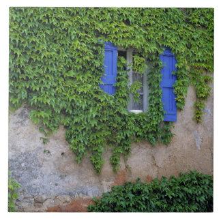 Europe, France, Lourmarin. Cascading ivy Tile