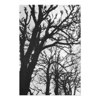 Europe, France, Paris. Winter trees, Marco Photo Print