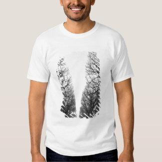 Europe, France, Paris. Winter trees, Marco Polo