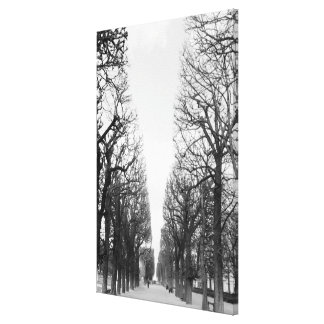 Europe, France, Paris. Winter trees, Marco Polo Gallery Wrap Canvas