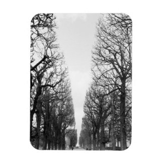 Europe, France, Paris. Winter trees, Marco Polo Rectangular Photo Magnet