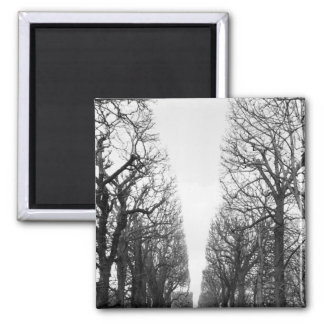 Europe, France, Paris. Winter trees, Marco Polo Square Magnet