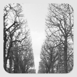 Europe, France, Paris. Winter trees, Marco Polo Square Sticker