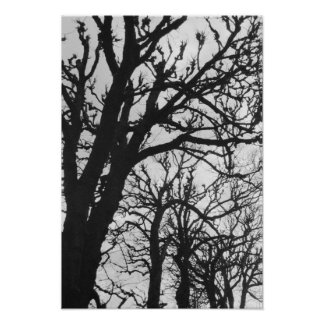 Europe, France, Paris. Winter trees, Marco Poster