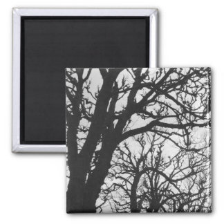 Europe, France, Paris. Winter trees, Marco Square Magnet