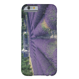 Europe, France, Provence. Lavander fields Barely There iPhone 6 Case