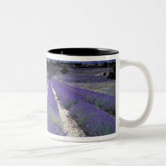 Europe, France, Provence. Lavander fields Mug