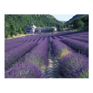 Europe, France, Provence. Lavander fields Postcard