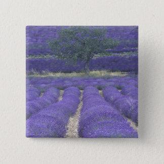 Europe, France, Provence, Sault, Lavender fields 2 15 Cm Square Badge