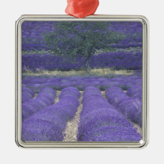 Europe, France, Provence, Sault, Lavender fields 2 Christmas Ornament
