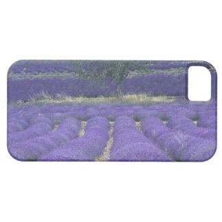 Europe, France, Provence, Sault, Lavender fields 2 iPhone 5 Case