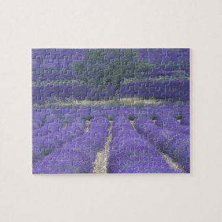 Europe, France, Provence, Sault, Lavender fields 2 Jigsaw Puzzle