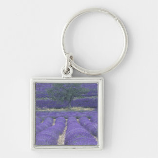 Europe, France, Provence, Sault, Lavender fields 2 Key Ring