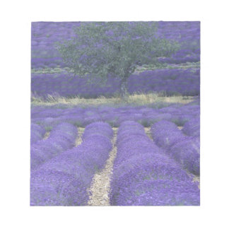Europe, France, Provence, Sault, Lavender fields 2 Notepad