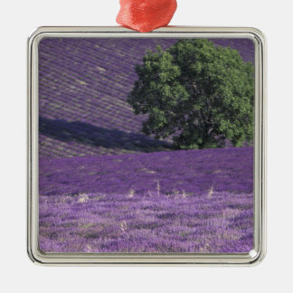 Europe, France, Provence, Sault, Lavender fields Christmas Ornament