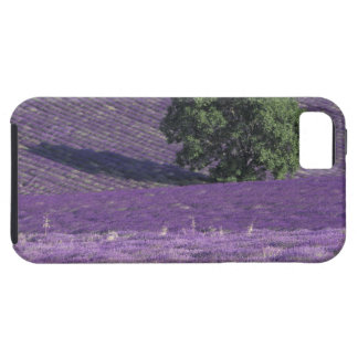 Europe, France, Provence, Sault, Lavender fields iPhone 5 Case