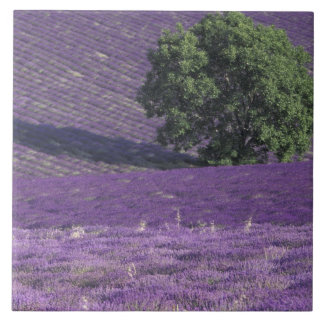 Europe, France, Provence, Sault, Lavender fields Tile