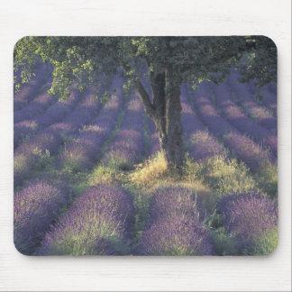 Europe, France, Provence, Sault, Lavender Mouse Mat