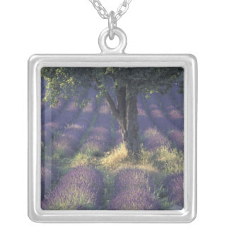Europe, France, Provence, Sault, Lavender Silver Plated Necklace