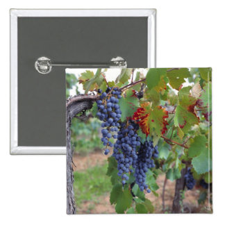 Europe, France, Roussillon. Vineyards, with 15 Cm Square Badge