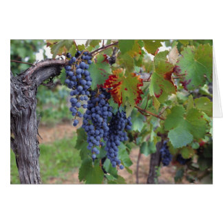 Europe, France, Roussillon. Vineyards, with Greeting Card