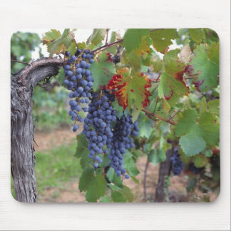Europe, France, Roussillon. Vineyards, with Mouse Mat