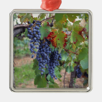 Europe, France, Roussillon. Vineyards, with Silver-Colored Square Decoration