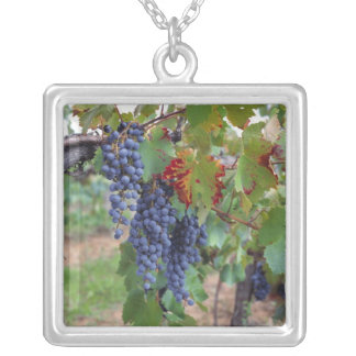 Europe, France, Roussillon. Vineyards, with Square Pendant Necklace