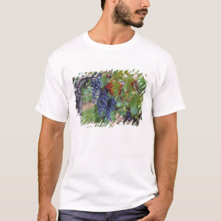 Europe, France, Roussillon. Vineyards, with T-Shirt