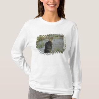 Europe, Greece, Crete (aka Kriti). Small village T-Shirt
