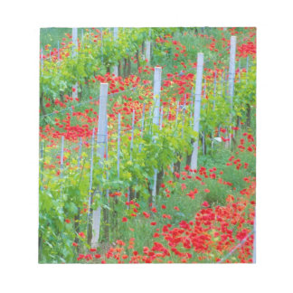 Europe, Italy, Tuscany. Colorful red poppies in Notepad