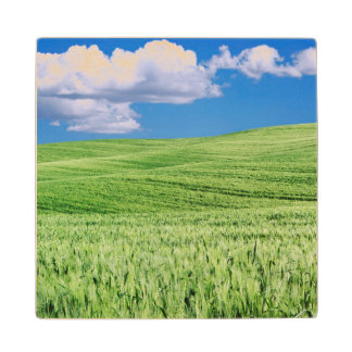 Europe, Italy, Tuscany. Landscape Of Wheat Wood Coaster