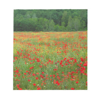 Europe, Italy, Tuscany, red poppies in field. Notepad