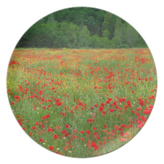 Europe, Italy, Tuscany, red poppies in field. Plate