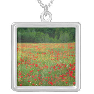 Europe, Italy, Tuscany, red poppies in field. Silver Plated Necklace