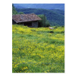 Europe, Italy, Tuscany, Siena, Chianti. Post Card