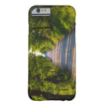 Europe, Italy, Tuscany, tree lined road Barely There iPhone 6 Case