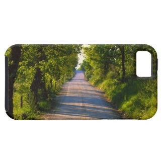 Europe, Italy, Tuscany, tree lined road iPhone 5 Case
